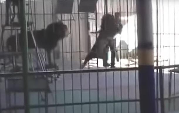 Лев роздер дресирувальника на очах глядачів