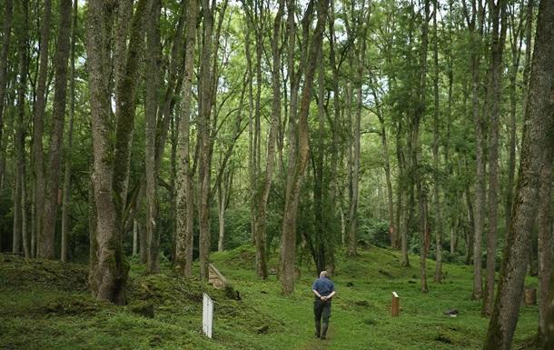 Австрія і ФРН допоможуть Україні підрахувати ліси