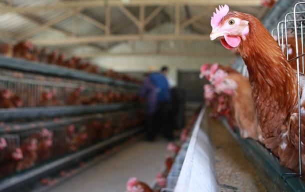 Евросоюз запретил импорт птицы из Украины