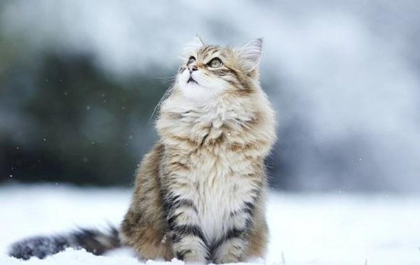На католицьке Різдво Україну засипле снігом