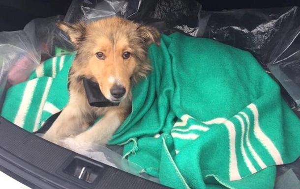 Пес дві доби прикривав собою поранену собаку