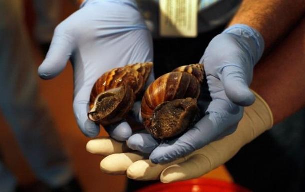 Україна експортувала равликів всемеро більше, ніж сала