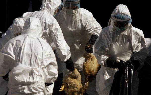 В Южной Корее уничтожили 26 миллионов птиц из-за гриппа
