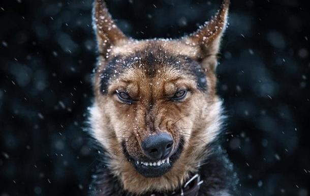 Під Києвом собаки на смерть загризли чоловіка
