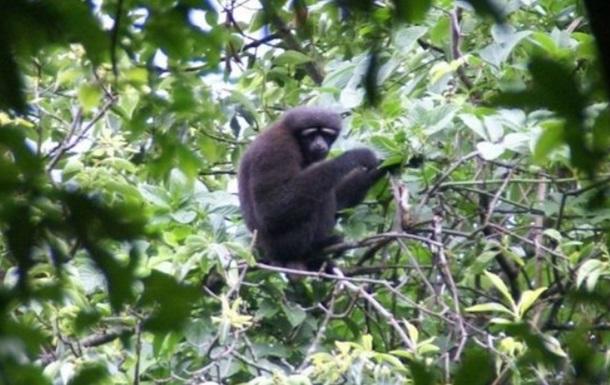 Новий вид приматів назвали на честь героя  Зоряних воєн