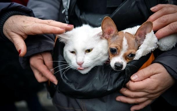 Вчені довели, що коти не дурніші від собак