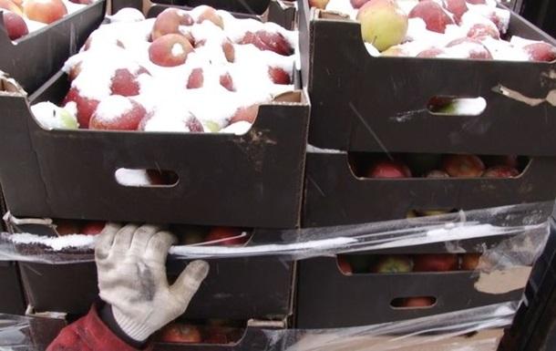 В России уничтожили 60 тонн польских яблок