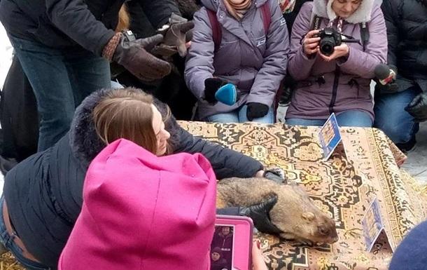 Український бабак зробив дивний прогноз щодо безвізу