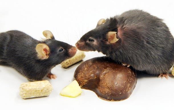 Голодание замедляет старение - ученые