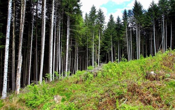 ЄС до Ради: Чекаємо на дозвіл вивезти ліс