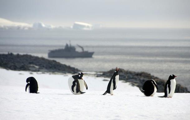 Вчені через 22 роки робіт з ясували, що їдять пінгвіни