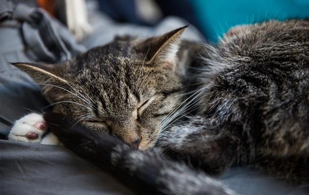 У Києві бездомних котів визнали частиною екосистеми