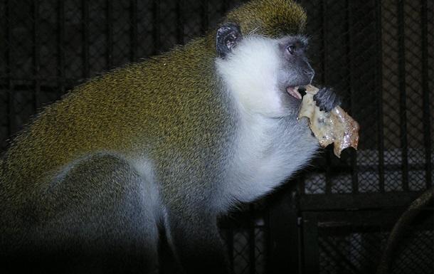 У Харкові мавпи відсвяткували Масляну