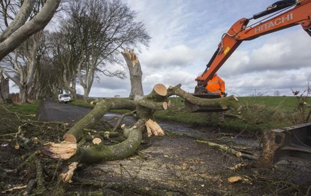 В Ірландії ураган зніс 200-річне дерево з Ігри престолів