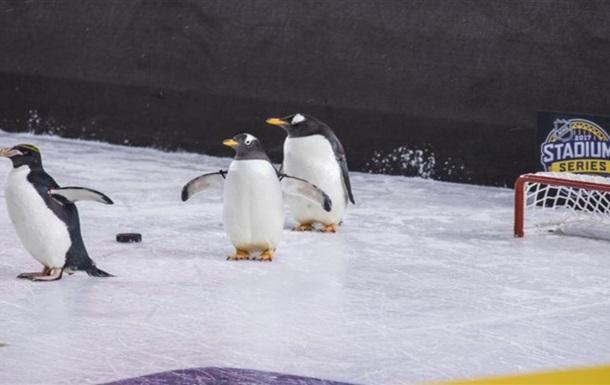 Пінгвіни відвідали Піттсбург під час матчу НХЛ