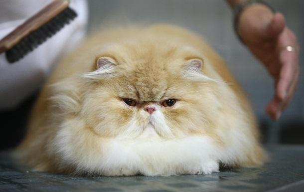Ученые нашли в организме домашних кошек опасные химикаты