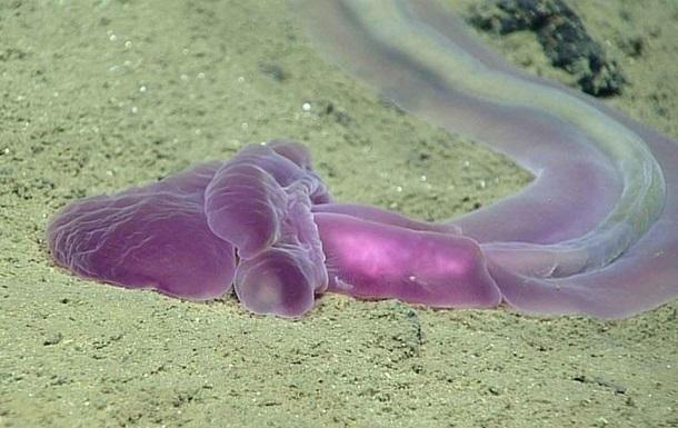 Чужі з глибин. Фантастичні тварини океанів