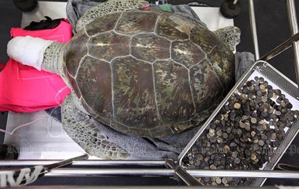 У Таїланді померла черепаха, яка з їла 915 монет