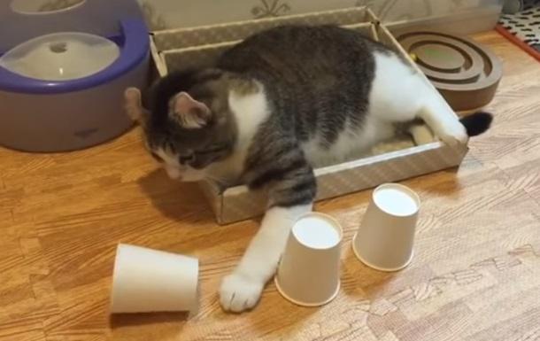 Сеть удивил умный кот, разгадавший фокус с шариком