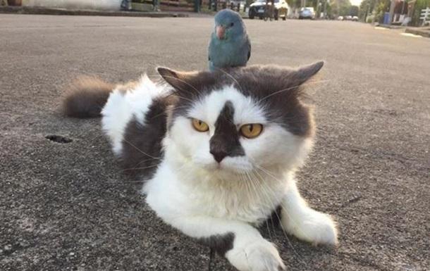 В Сети показали ленивого попугая, оседлавшего кота