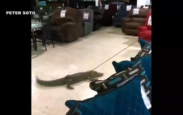 У США алігатора протягли на повідку по магазину