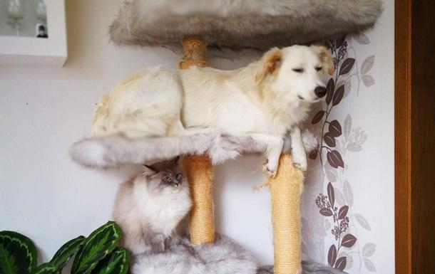 В Сети показали спящую на кошачьем дереве собаку