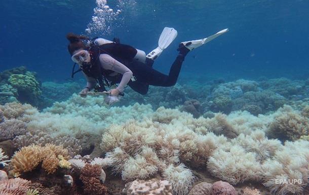 Большой барьерный риф обесцвечен на две трети
