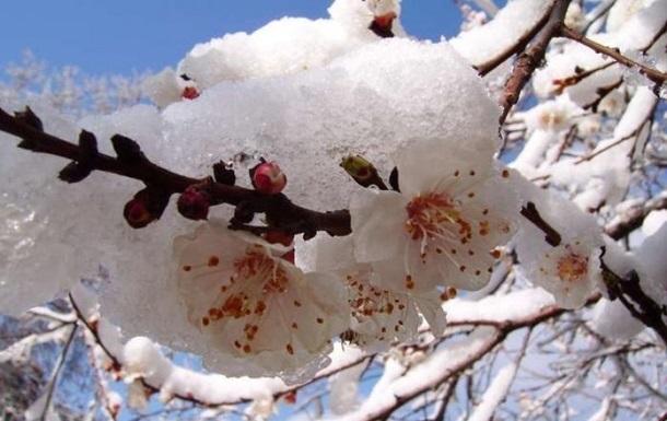 Заморозки в Україні знищили третину врожаю фруктів