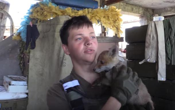 У бійців АТО з явився пухнастий талісман – лисиця