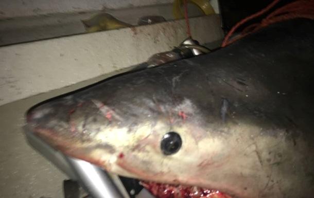 Велика акула скочила у човен до рибалки