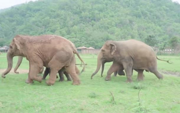 Стадо слонов поприветствовало спасенного слоненка