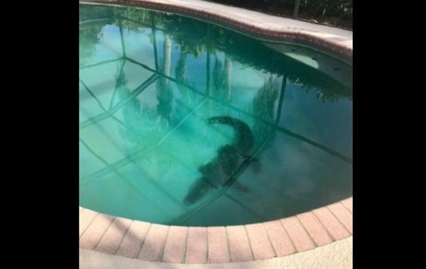 В США аллигатор оккупировал частный бассейн