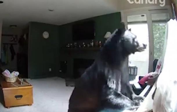 Медведь вломился в дом и поиграл на пианино