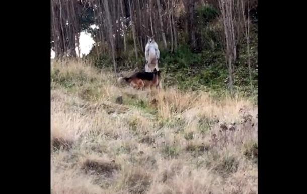 Схватку кенгуру и собаки показали на видео