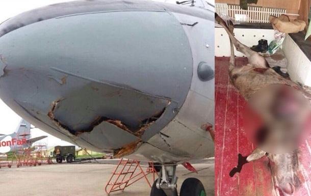 В России самолет Росгвардии сбил лося