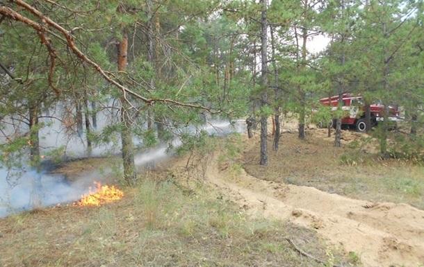 На Херсонщині гасять масштабну лісову пожежу