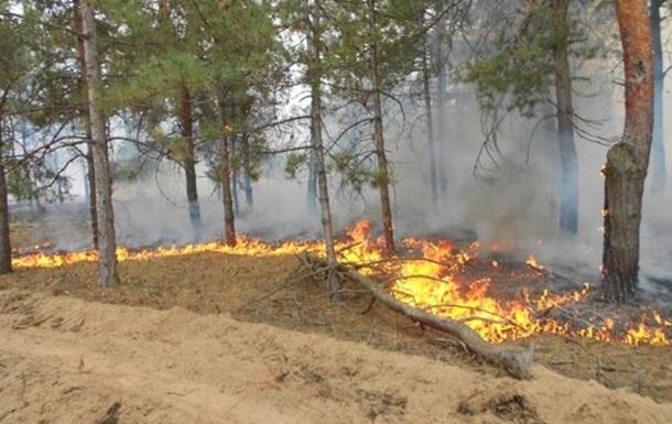 У Херсонській області добу гасять лісову пожежу