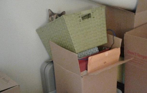 Знайди кота: в Мережі з явилася серія фотозагадок