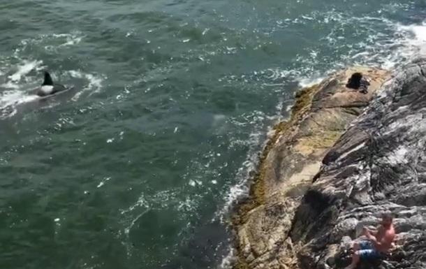 У Канаді косатки прогнали з води відпочивальників