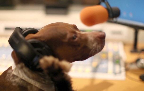 В Германии появилось радио для собак