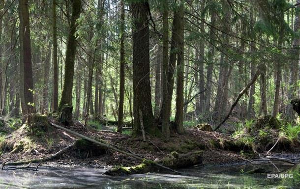 Суд ЄС заборонив Польщі рубати ліс в Біловезькій пущі