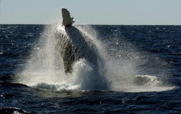 В Австралии в  лодку с пассажирами врезался кит