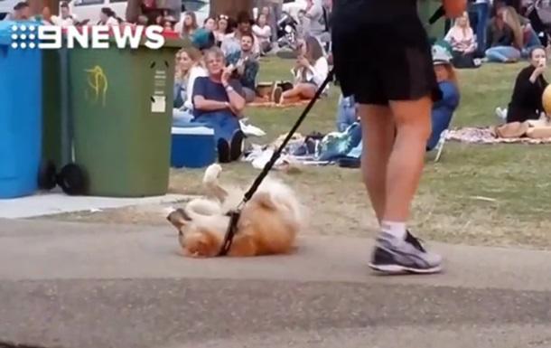 Не желающая покидать парк собака повеселила Сеть