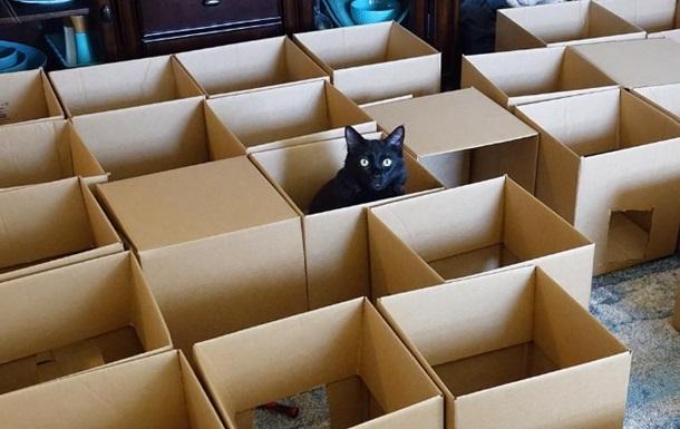 Житель США построил для котов лабиринт из коробок