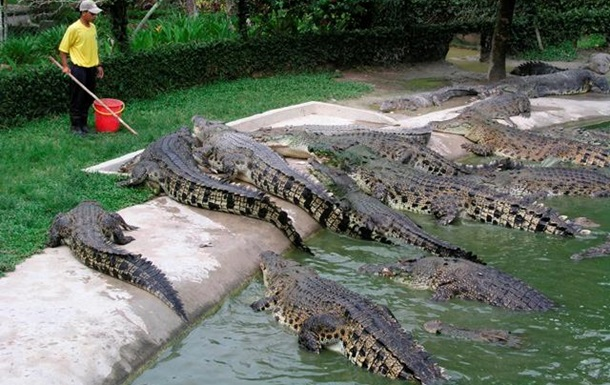 Крокодиловые фермы? Да!