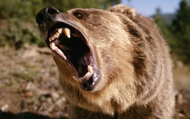У Росії ведмідь відкусив руку п яному відвідувачу кафе