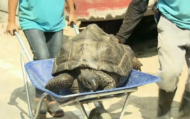 В Японии гигантская черепаха сбежала из зоопарка