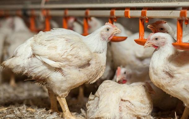 Нідерланди інвестують у «Володимир-Волинську птахофабрику»