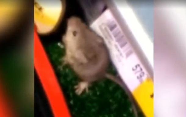 В киевском супермаркете засняли евшую суши мышь