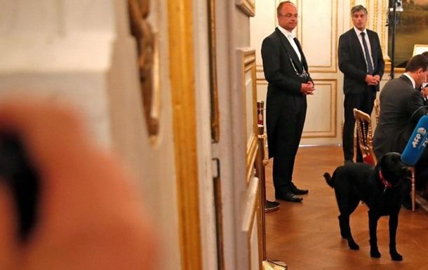 Президент Франції взяв собаку з притулку
